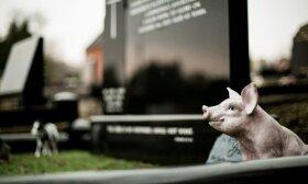 Specialistė – apie praktišką kapų madą ir keistus lietuvių įpročius: žmonės paminklus renkasi sau