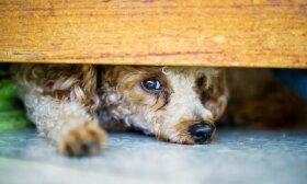 Kėdainietė užfiksavo žiaurų smurto protrūkį: moteris lupo šunį be gailesčio