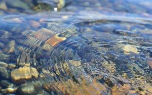 Niekada nepasitikėk ramiu vandens paviršiumi + IŠTRAUKA
