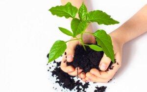 Mėnulio kalendorius – kada tinkamiausias metas persodinti augalus rugsėjį