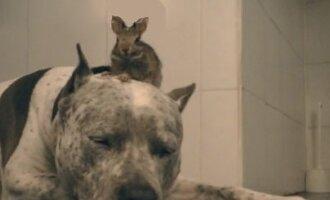 Šuo ir mažasis jo draugas