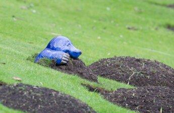 Kurmiai sode ir darže: ką daryti?