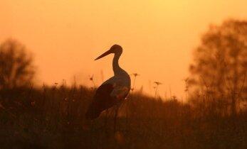 Britų ornitologas rado tobulą Lietuvos vietą paukščių rojui