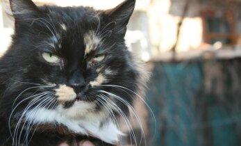 Katytė Alisa negalėdama laisvai įkvėpti gyveno tris metus
