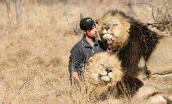 Kitokios atostogos: 4500 litų už dviejų savaičių darbą šalia liūtų