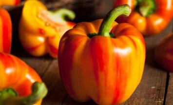 Jau galite daiginti pomidorus ir paprikas