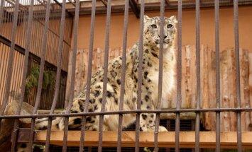 Laukia pokyčiai: kas keisis zoologijos sode ir privačiuose aptvaruose?