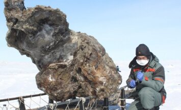 Sibire aptiktos puikiai išsilaikiusios mamuto liekanos