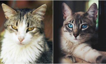 Benamės katės