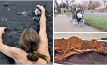 Išgelbėti gyvūnai