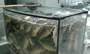 Skaitytojai pagailo akvariume laikytų karpių