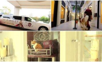 Gyvūnų viešbučiai