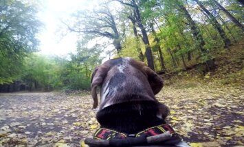 Šuo pėdsakys