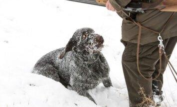Medžiotojas nušovė šunį (Asociatyvi nuotr.)