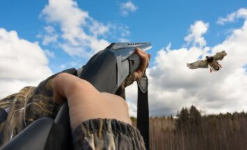 Paukščių medžioklė