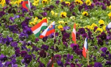Central European countries' flags in Kaunas