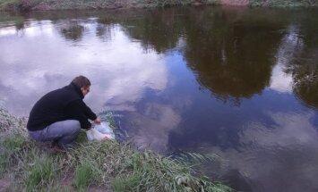 Minijos upė įžuvinta lašišomis