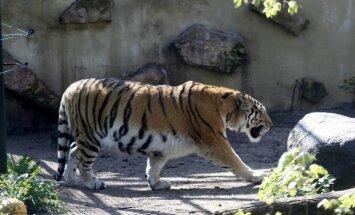 Pavasaris zoologijos sode