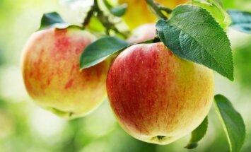 Vaismedžiai, kuriuos geriausia auginti mažose sodybose ar soduose