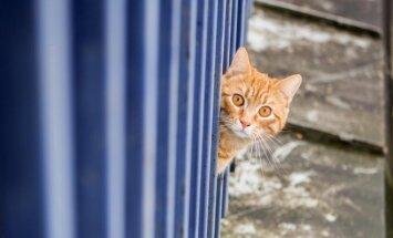 Katinas (asociatyvi nuotr.)