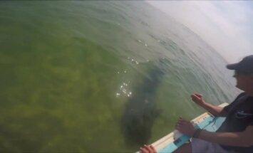 Masačusetse paplūdimyje besiilsintys žmonės gelbėjo ryklį