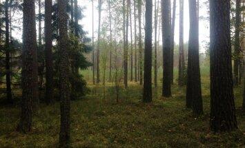 Privačių miško savininkų laukia naujas mokestis
