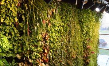 Apželdinta siena, kuri gali būti įkurdinta ir namuose, ir biure