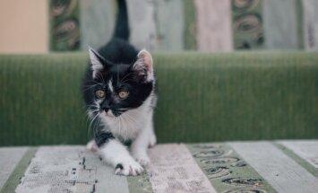 Namų ieškanti katytė