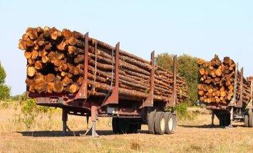 Aistros dėl medienvėžių nesibaigia
