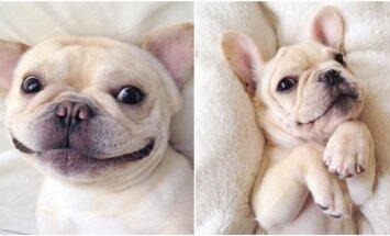 Mielai atrodantis šuo