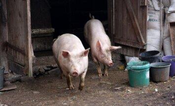 Kiaulės