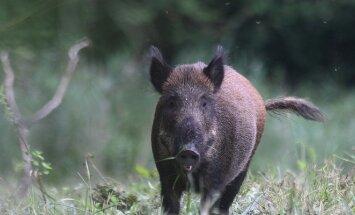 Žemės bei miškų savininkai įsitikinę, jog teisė medžioti neatsiejama nuo privačios žemės nuosavybės