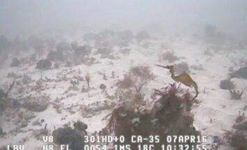 Mokslininkai nufilmavo naują Jūrų drakonų rūšį