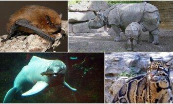 Unikalios gyvūnų rūšys, kurios išnyko per pastarąjį dešimtmetį