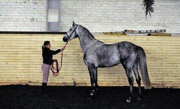 Trakėnų žirgas