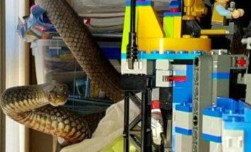Tarp vaiko žaislų Australijoje rasta nuodinga gyvatė