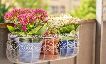 Gėlės balkonuose