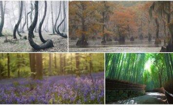 Gražiausi pasaulio miškai