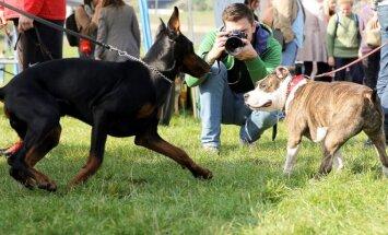 Ne kiekvienas šuo gali būti kaniterapeutu