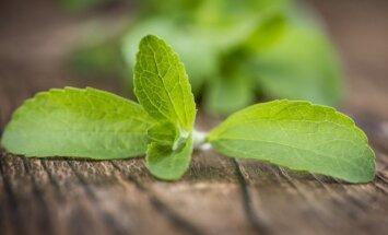 Augalas, kuris pasaldins gyvenimą