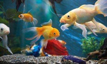 Kaip pasirinkti tinkamą akvariumą?
