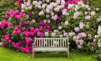 Patarimai pradedantiems sodininkams, ką auginti saulėtose ir pavėsingose vietose