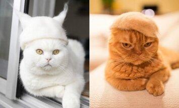 Katinai su kepurėmis iš kailio