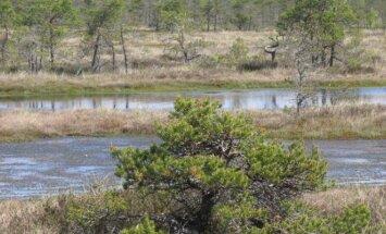 Prie rūšių apsaugos prisideda natūralių biotopų išsaugojimas