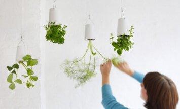 Kabantys augalai