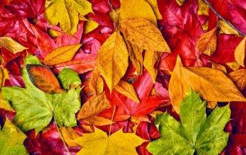 Patarimai, kaip rudenį greitai atsikratyti lapų