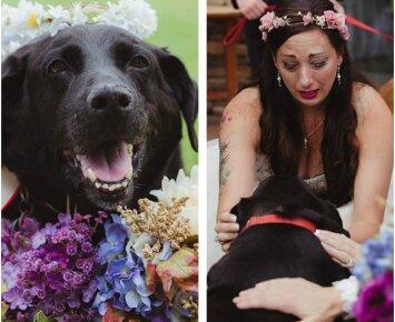 Šunelis sukaupė paskutines jėgas, kad svarbiausią šeimininkės gyvenimo dieną pabūtų šalia jos
