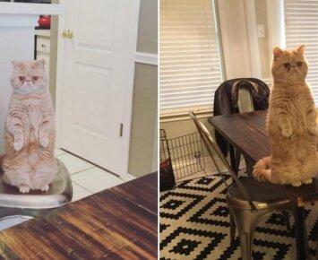 Išskirtinio katino nuotraukos juokina internautus