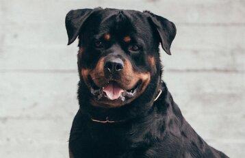5 - oji dresūros pamoka: kaip išmokyti šunį visada atbėgti pas jus?