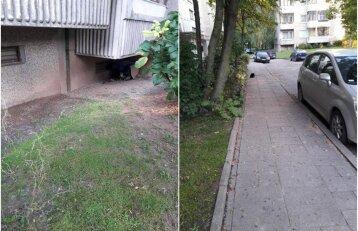 Užvirė karas dėl benamių kačių: kiemas virto kiaulide
